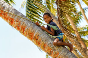 Local boy climbing palm tree to swing on a rope swing in Lavena